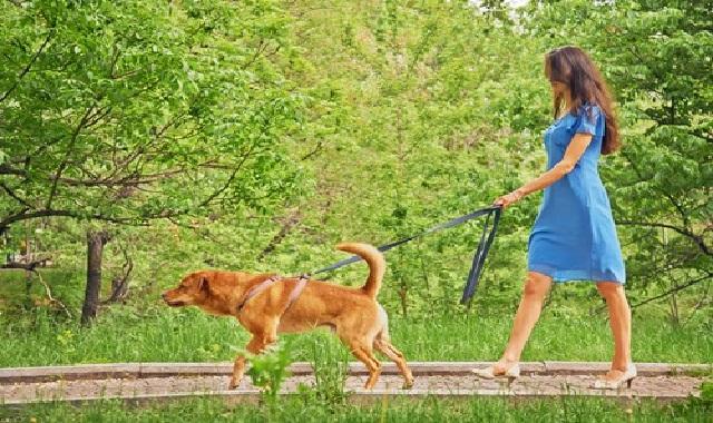 Cuidados Com os Cães no Verão passeio