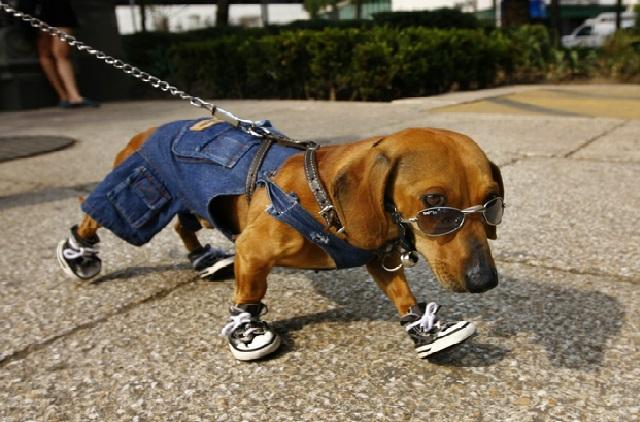 Cuidados Com os Cães no Verão patas