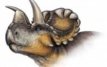 Dinossauro Nova Espécie – Descoberta Por Pesquisador