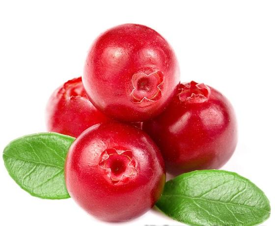 Cranberry ou Oxicoco – Beneficios