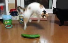 Gatos Medo de Pepino –Vídeo Viral