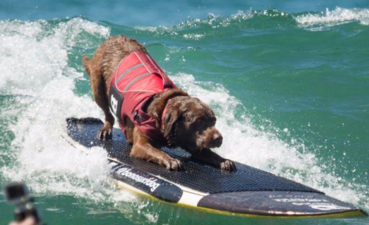 Surfdog - Modalidade