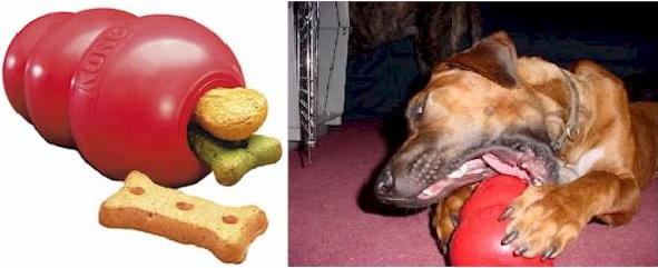 Brinquedos Interativos Cães – Benefícios Dicas