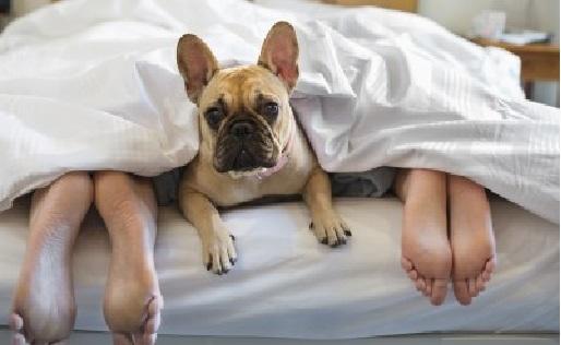 Dormir Com Animal de Estimação -  Consequências
