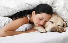 Dormir Com Animal de Estimação – Riscos e Consequências
