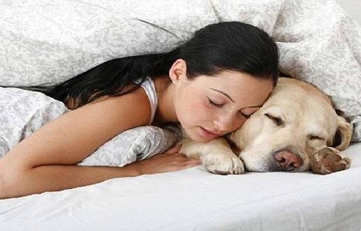Dormir Com Animal de Estimação -  Riscos e Consequências