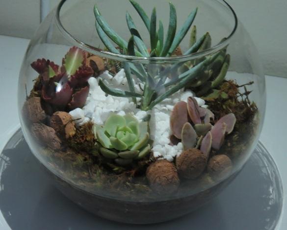 Plantas Suculentas - Como Cultivar  Fazer Mudas