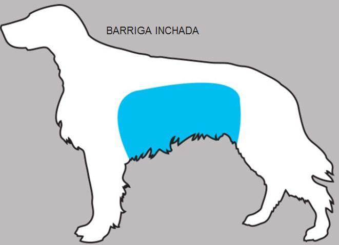 Sintomas Podem Salvar  Seu Cão -  Sinais barriga