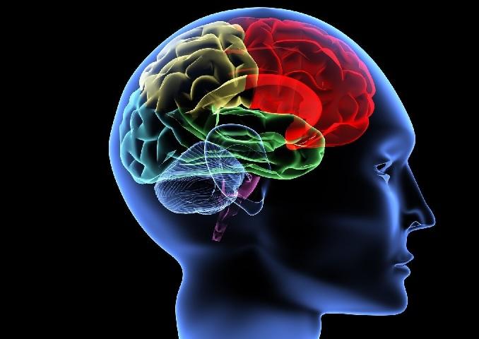 Como Manter a Saúde do Cérebro em Dia – Dicas
