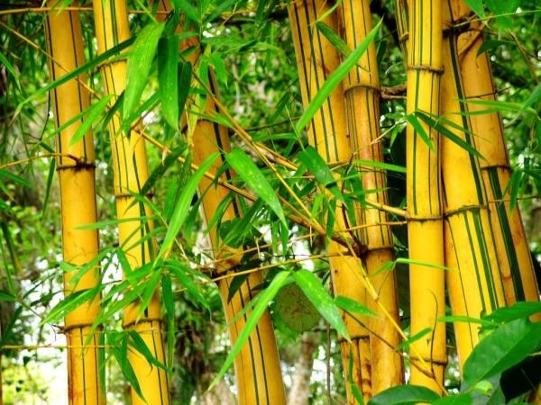 Bambu na Decoração – Modelos e Dicas