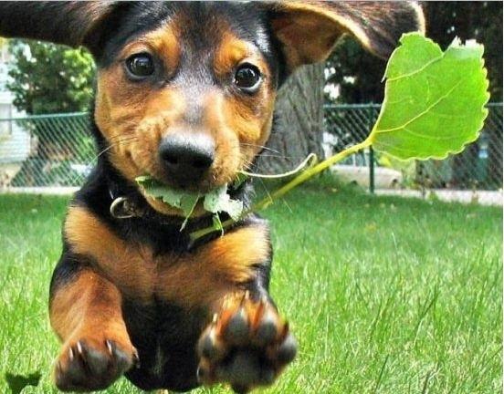 Plantas Ornamentais Tóxicas – Cuidados Necessários Cães e Gatos