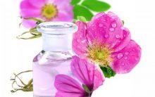 Rosa Mosqueta – Benefícios e Como Usar