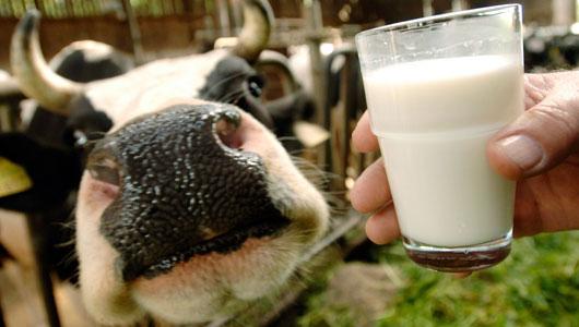 Gravidez e Alimentos Proibidos – leite