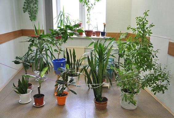 Planta Morrendo – Dicas Como Reanimar