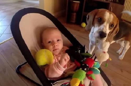 Raças de Cachorros Para Famílias - Dicas beagle