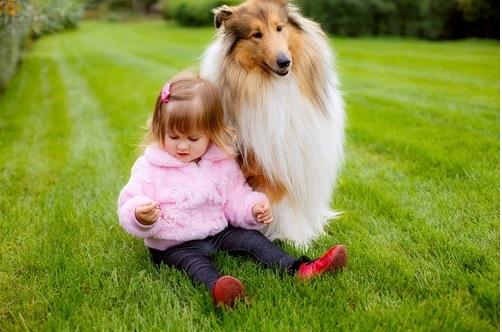 Raças de Cachorros Para Famílias - Dicas colie