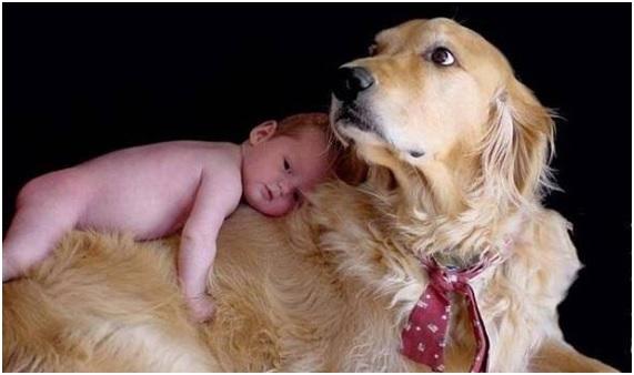 Raças de Cachorros Para Famílias - Dicas golden