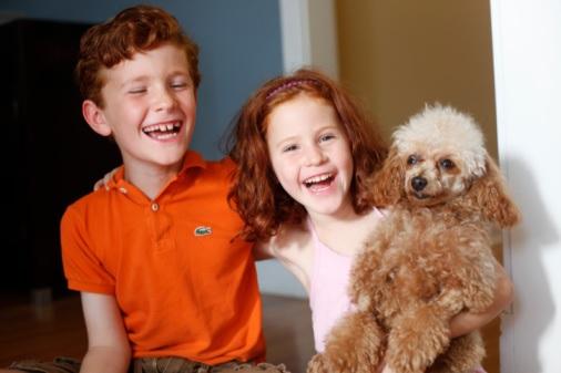 Raças de Cachorros Para Famílias - Dicas poodle
