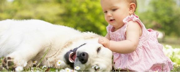 Raças de Cachorros Para Famílias - Dicas