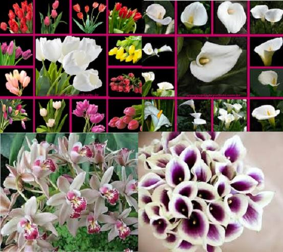 Flores Para Decoração de Casamento -