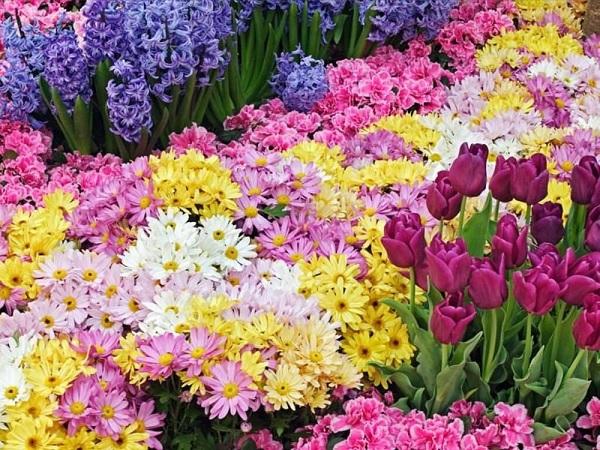 Flores Para Decoração de Casamento Quais e Seu Significado
