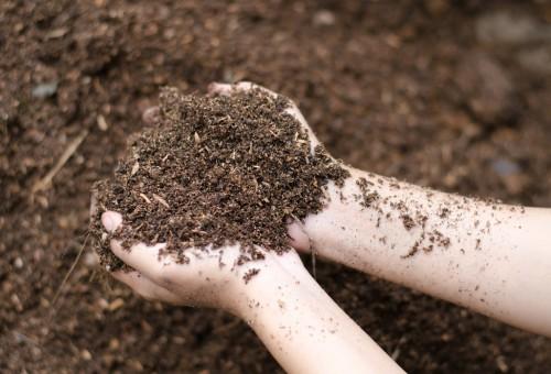 Jardim no Inverno – Cuidados substratos