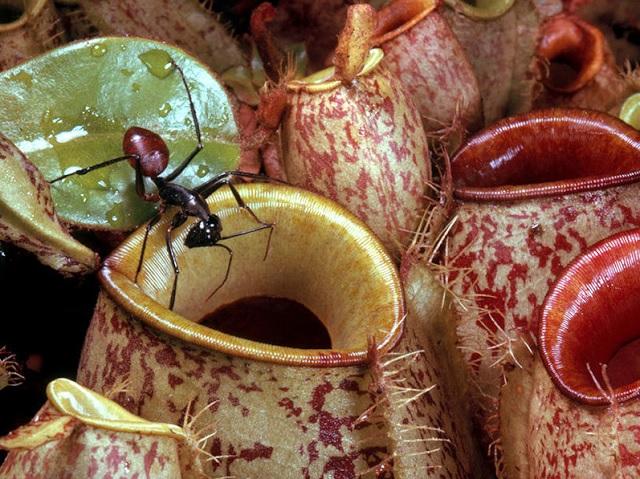 Planta Carnívora – Como Plantar Cuidar