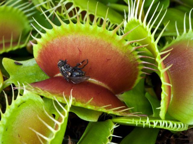 Planta Carnívora – Como Cultivar e Cuidados