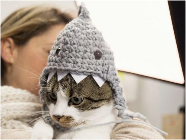 Touca Tubarão Para Gato – Como Fazer