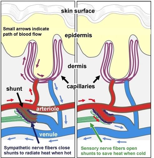 Fibromialgia Estudos Recentes –
