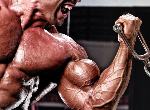 Musculação Maneira Certa