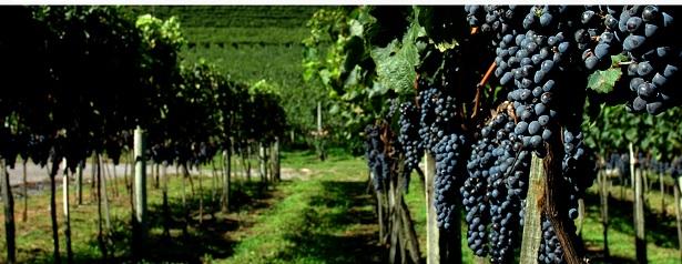 Congresso Mundial da Vinha e do Vinho no Brasil - Como Participar
