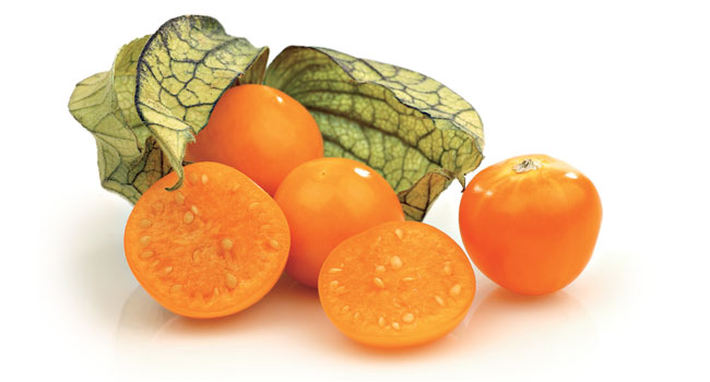 Physalis Fruta Exótica - Curiosidades e Benefícios