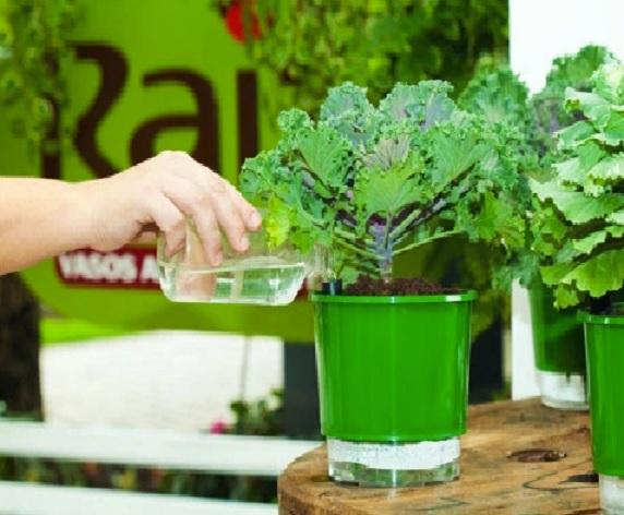horta em vasos  agua