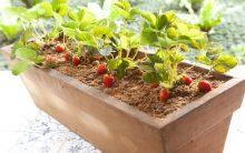 Horta Em Vasos – Como Fazer