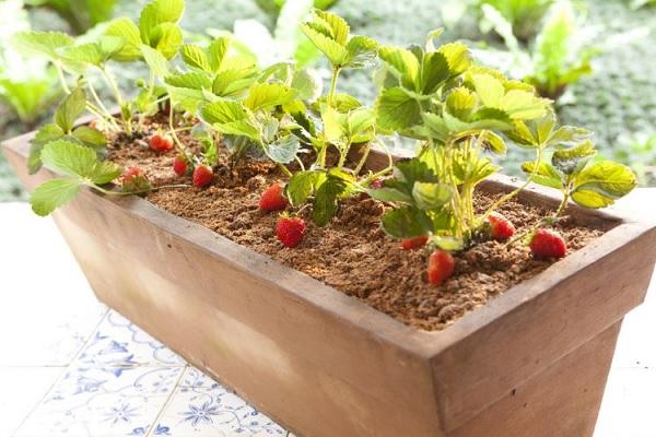 horta em vasos  como fazer