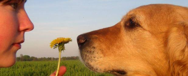 ágrimas Ácidas Em Cães – Causas