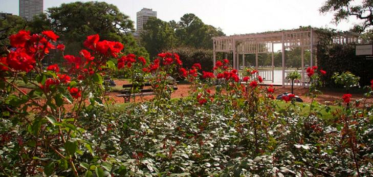Belos Jardins do Mundo - rosedal