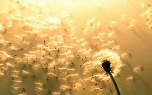 crises-alergicas-durante-a-primavera-polen