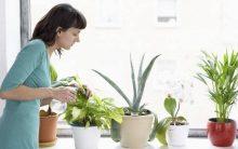Purificar o Ar Com Plantas – Como Escolher