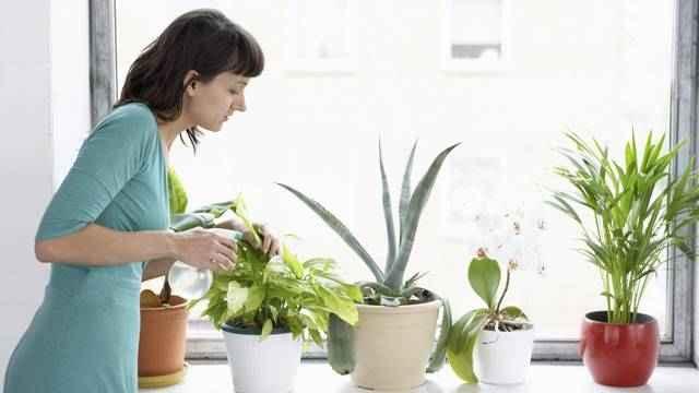 purificar-o-ar-com-plantas-como-escolher