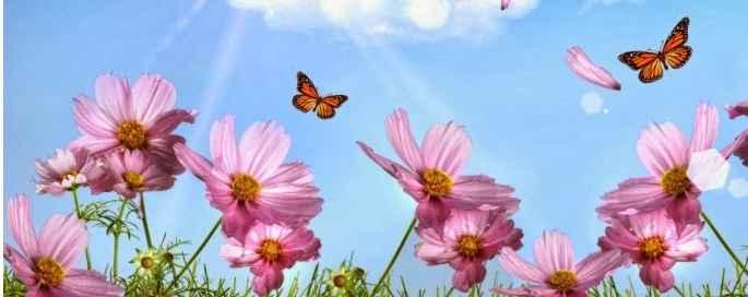 borboletas-no-jardim-como-atrair