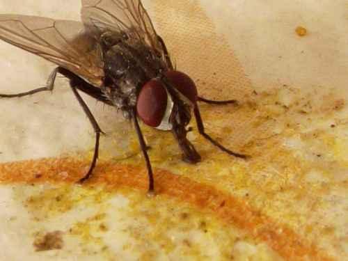 Repelente Natural Para Formigas e Moscas – Como Fazer