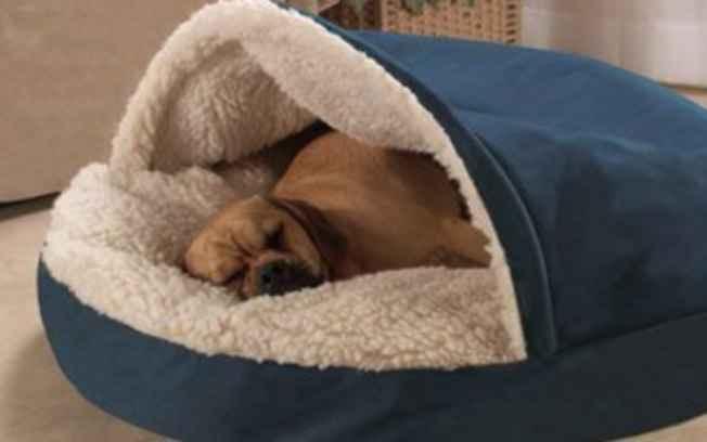 Cama Para Cachorro – Como Escolher