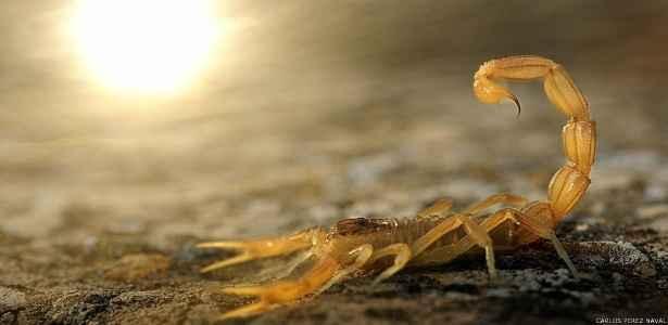 picada-de-escorpiao-como-tratar-e-evitar