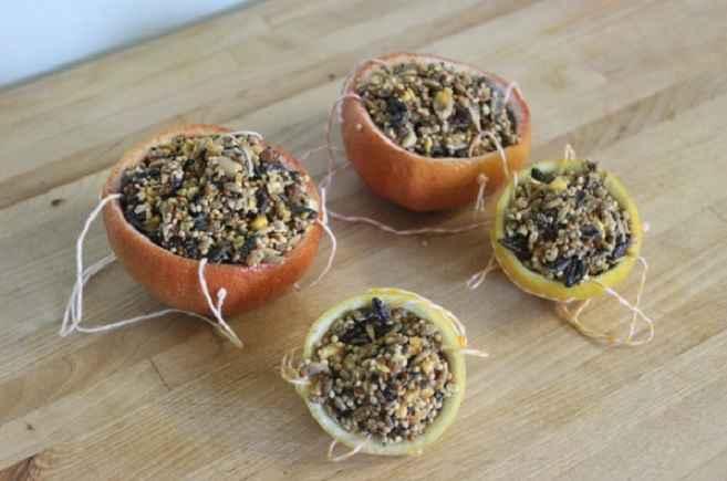Comedouros Para Pássaros Com Cascas de Frutas – Como Fazer