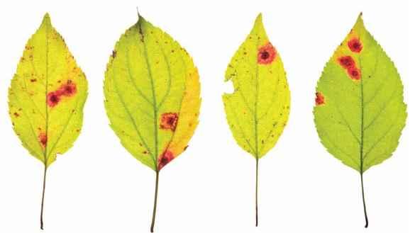 Eliminar Fungos Nas Plantas – Receita Caseira