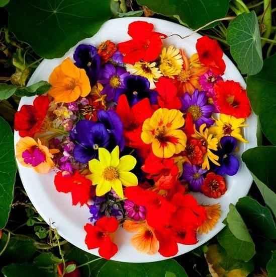 Flores Comestíveis – Dicas Para Usar e Cuidados Necessários