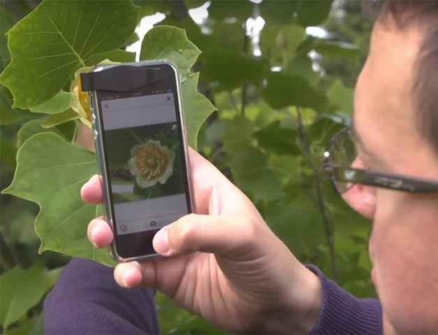 Identificador de Plantas – Novo Aplicativo