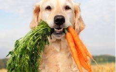 Legumes e Verduras Para Cães – As Melhores